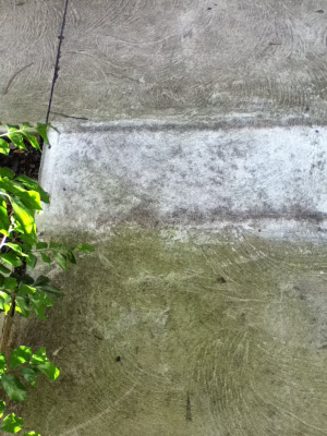 What is the fastest and easiest way to remove moss for Cleaning concrete paths