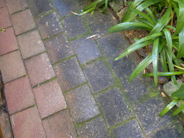 Paving Cleaning Gives Pavers A New Lease Of Life